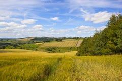 Paesaggio d'agricoltura inglese nell'estate Fotografia Stock Libera da Diritti