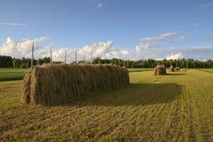 Paesaggio d'agricoltura tradizionale Immagine Stock