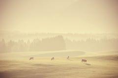 Paesaggio d'annata con il pascolo delle mucche Fotografia Stock Libera da Diritti