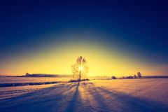 Paesaggio d'annata del campo di inverno Immagine Stock Libera da Diritti
