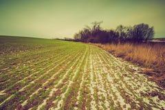 Paesaggio d'annata del campo di inverno Immagini Stock Libere da Diritti