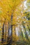 Paesaggio d'autunno Fotografie Stock