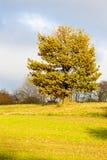 Paesaggio d'autunno Fotografia Stock
