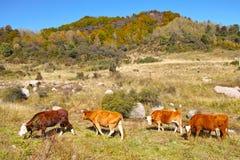 Paesaggio d'autunno della montagna Immagini Stock Libere da Diritti