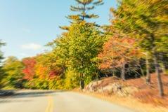 Paesaggio d'autunno Foglie e fondo degli alberi, fogliame rosso Fotografie Stock Libere da Diritti