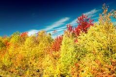 Paesaggio d'autunno Foglie e fondo degli alberi, fogliame rosso Fotografie Stock