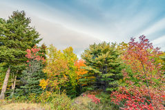 Paesaggio d'autunno Foglie e fondo degli alberi, fogliame rosso Fotografia Stock