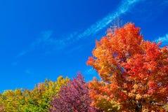 Paesaggio d'autunno Foglie e fondo degli alberi, fogliame rosso Immagine Stock Libera da Diritti