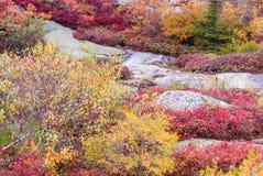 Paesaggio d'autunno Foglie e fondo degli alberi, fogliame rosso Immagine Stock