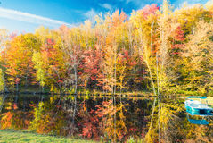 Paesaggio d'autunno Foglie e fondo degli alberi, fogliame rosso Fotografia Stock Libera da Diritti