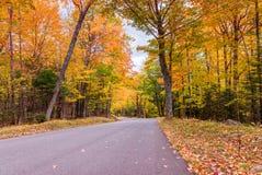 Paesaggio d'autunno Foglie e fondo degli alberi, fogliame rosso Immagini Stock Libere da Diritti