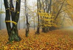 Paesaggio d'autunno nebbioso di caduta - immagini stock libere da diritti