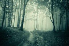 Paesaggio da una foresta scura con nebbia immagini stock libere da diritti
