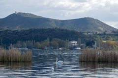 Paesaggio dal lago Orestiada di Kastoria, Grecia Con un cigno Immagini Stock
