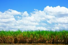 paesaggio dall'azienda agricola caraibica dello zucchero immagini stock libere da diritti