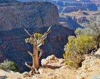 Paesaggio dall'orlo del sud di Grand Canyon Fotografie Stock