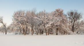 Paesaggio degli alberi all'inverno in parco Immagine Stock