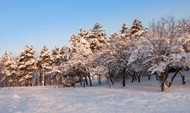 Paesaggio degli alberi all'inverno in parco Fotografia Stock
