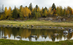 Paesaggio degli alberi e del lago Immagini Stock Libere da Diritti
