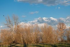 Paesaggio degli alberi e degli uccelli di caduta Fotografia Stock Libera da Diritti