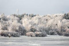 Paesaggio degli alberi gelidi, neve bianca di inverno nel parco della città Alberi coperti di neve Fotografia Stock