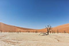 Paesaggio degli alberi morti ed asciutti di vlei di morte, con le dune rosse in Sossusvlei nafta immagine stock