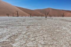 Paesaggio degli alberi morti ed asciutti di vlei di morte, con le dune rosse in Sossusvlei nafta fotografia stock libera da diritti