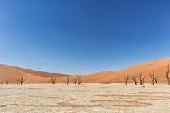 Paesaggio degli alberi morti ed asciutti di vlei di morte, con le dune rosse in Sossusvlei nafta fotografie stock