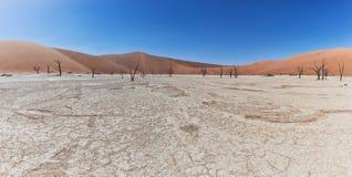 Paesaggio degli alberi morti ed asciutti di vlei di morte, con le dune rosse in Sossusvlei nafta fotografia stock