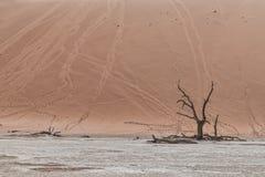 Paesaggio degli alberi morti ed asciutti di vlei di morte, con le dune rosse in Sossusvlei nafta fotografie stock libere da diritti