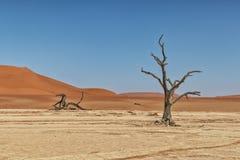 Paesaggio degli alberi morti ed asciutti di vlei di morte, con le dune rosse in Sossusvlei nafta immagini stock libere da diritti
