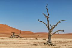 Paesaggio degli alberi morti ed asciutti di vlei di morte, con le dune rosse in Sossusvlei nafta immagine stock libera da diritti