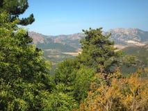 Paesaggio dei alpes corsician delle alte montagne con il grande jui del pino Fotografia Stock Libera da Diritti