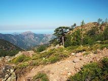 Paesaggio dei alpes corsician delle alte montagne con il grande pino, gr Immagini Stock Libere da Diritti