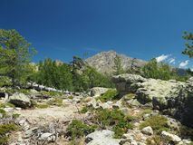 Paesaggio dei alpes corsician delle alte montagne con il grande ro dei pini Immagine Stock