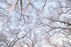 Paesaggio dei fiori di ciliegia bianchi giapponesi Immagini Stock