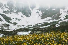 Paesaggio dei fiori e delle montagne di giallo del paesaggio della primavera Fotografie Stock
