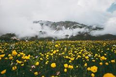 Paesaggio dei fiori e delle montagne di giallo del paesaggio della primavera Immagine Stock