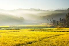 Paesaggio dei fiori gialli che sono coperti dalla foschia che viene dalle montagne Fotografie Stock