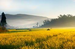 Paesaggio dei fiori gialli in Cina Immagine Stock Libera da Diritti