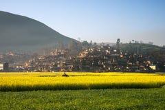 Paesaggio dei fiori gialli e della foschia che vengono dalle montagne Fotografie Stock
