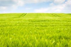 Paesaggio dei giacimenti di grano Fotografia Stock Libera da Diritti