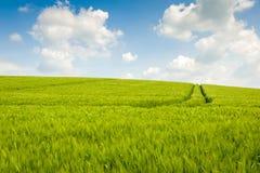 Paesaggio dei giacimenti di grano Fotografia Stock