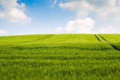 Paesaggio dei giacimenti di grano Fotografie Stock