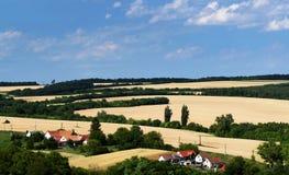 Paesaggio dei giacimenti di grano nell'ora legale Immagine Stock