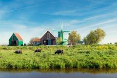 Paesaggio dei mulini a vento olandesi tradizionali ed azienda agricola vicino ad Amsterdam Fotografia Stock Libera da Diritti