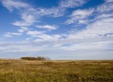 Paesaggio dei pascoli salini con gli alberi Fotografia Stock Libera da Diritti