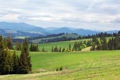 Paesaggio dei prati verdi con gli abeti e le montagne Fotografia Stock