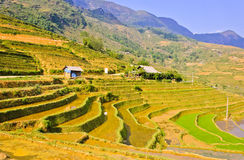 Paesaggio dei raccolti del riso di Sapa Immagini Stock