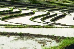 Paesaggio dei terrazzi del riso Fotografie Stock